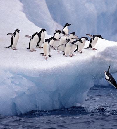 Istock 000011509776 antarktis pingvin
