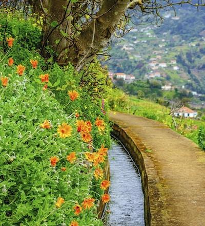 Liten elv i fargerike Madeira