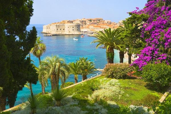 Grønne palmer og utsikt mot Dubrovnik og havet