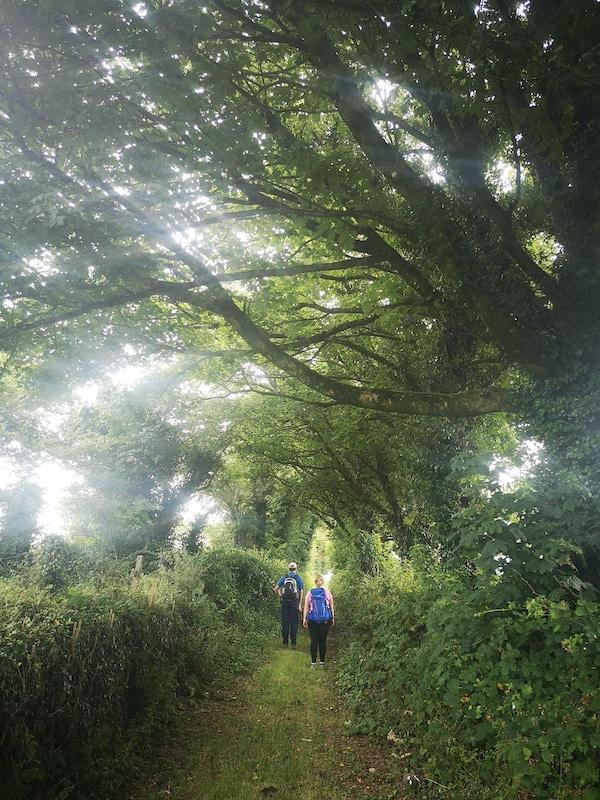To mennesker med tursekk fotografert bakfra på en skuggefull sti med store trær over og solskinn mellom bladene.