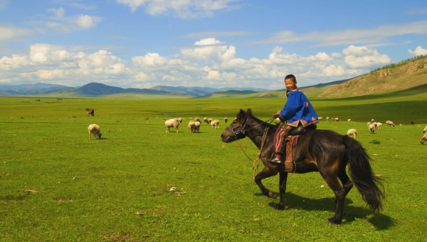 Mongolsk gutt som gjeter sin flokk med sauer / geiter.