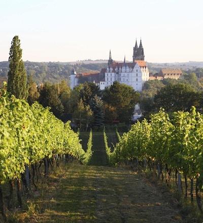 Sachsen Meissen Albrechtsburg vingård i høst