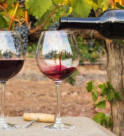 Foto av rødvin som helles i glass fra flaske foran uskarp bakgrunn på en vingård rett før høsting, med en hengende gren av druer. Ved glassene ligge en kork og vintage korketrekker
