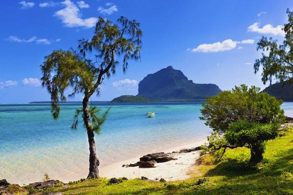 Strandkanten med to grønne trær og to båter på vannet i bakgrunnen