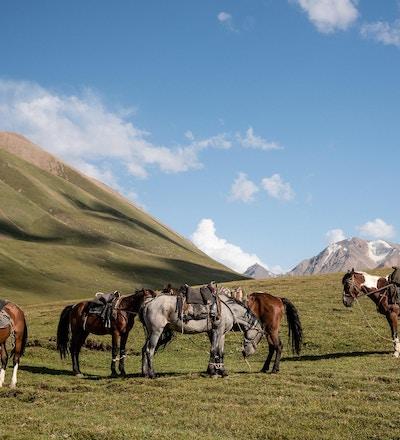 Hester i naturskjønne omgivelser i Kirgisistan.