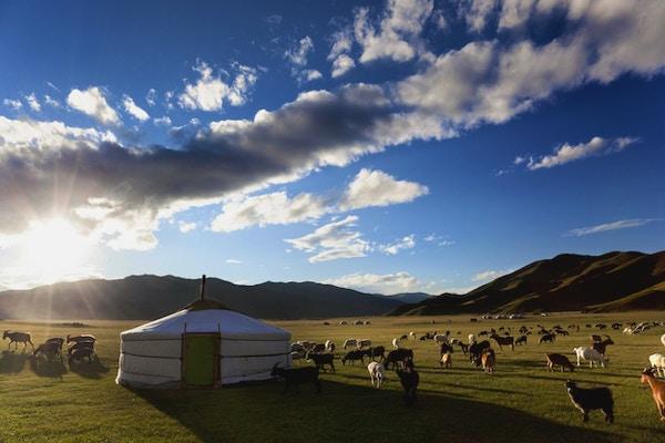Solen står opp i Orkhon-dalen mens lam beiter fritt