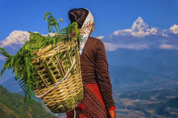 Kvinnne bærer kurv med planter på ryggen, Nepal.