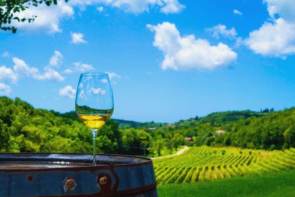 Et glass hvitvin på en vingård i Istria, Kroatia.