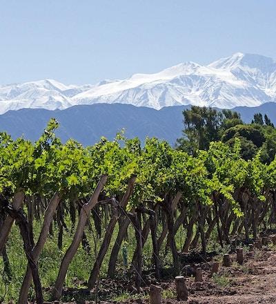 Nydelige rammer rundt vingårdene i Mendoza.