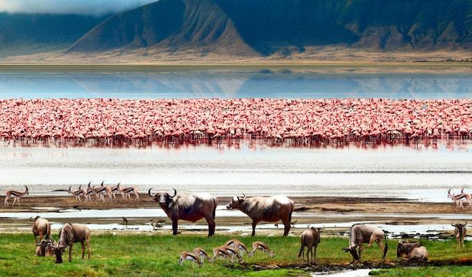 Det afrikanske dyrelivet. Vakker utsikt over innsjøen i Ngorongoro krater, Tanzania.