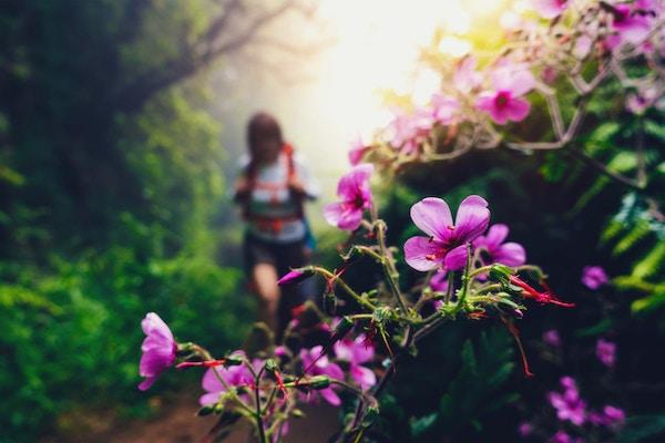 Defokusert turgåer som går gjennom den tåke skogen på Madeira (Levada do Caldeiré Verde). Vakre rosa villblomster i forgrunnen.