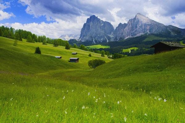 Alpe di Siusi, i bakgrunnen Sasso Platto og Sassolungo. Landemerker for Dolomittene. (UNESCO - verdens naturarv i Sør-Tirol, Italia).