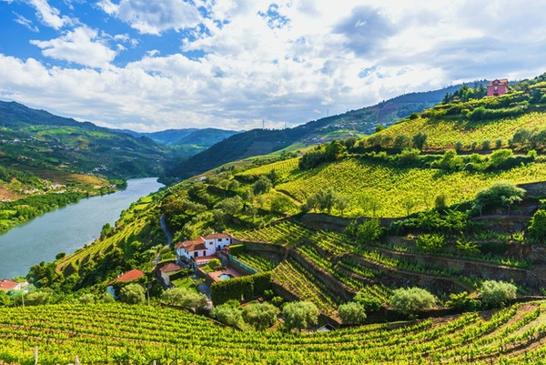 Vakkert landskap rundt elven Douro i Portugal - Vingårder