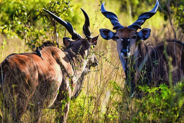Spennende dyreliv venter på deg i Vest-Afrika.