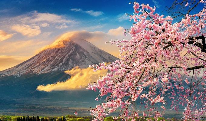 Fuji-fjellet og kirsebær blomstring om våren, Japan.