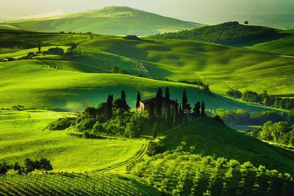 Gård med olivenlunder og vingårder.