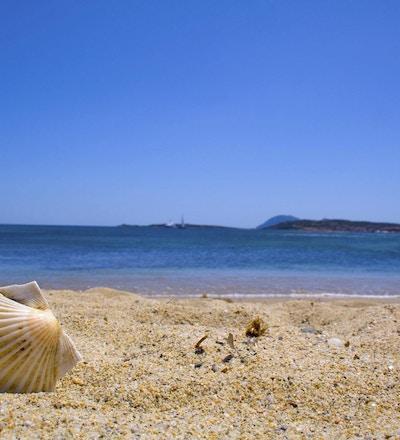 Skjell på stranden
