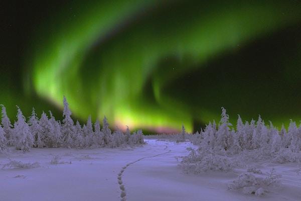 Vinternattslandskap med skog og polarnordlys