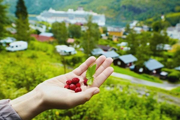Kvinnelig hånd med bær og blader av jordbær.