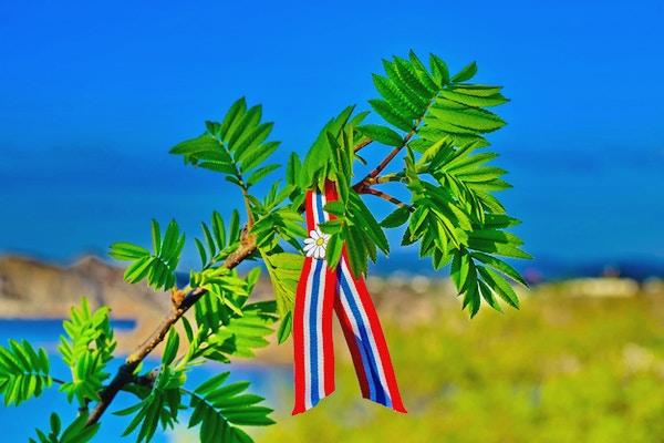 Rowan tree springblader mot blå himmel og havbakgrunn med norsk 17-mai-bånd. Norges grunnlovsdag feires 17. mai