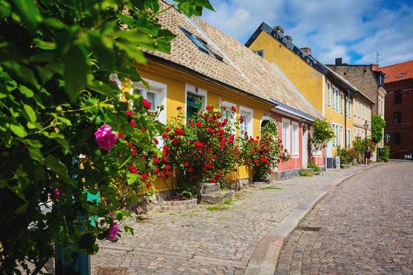 Brosteinsbelagt gate kantet med pastellfargede hus i gult og rosa med blomstrende klatreroser