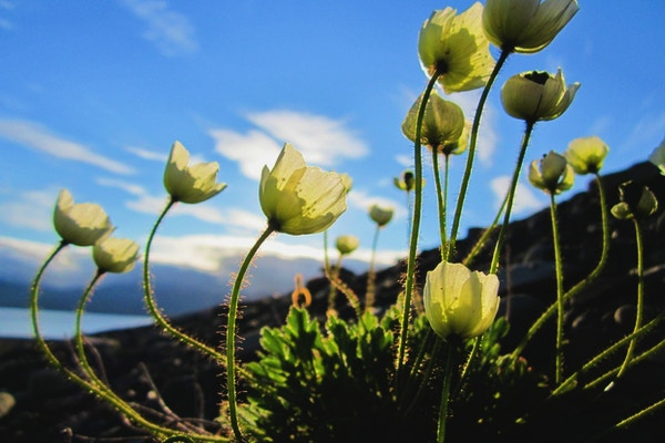 nærbilde av hvite blomster i sollys