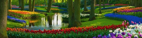 """""""Parker med flerfargede vårblomster langs et tjern. Plasseringen er Keukenhof-hagen, Nederland. Andre tulipanbilder:"""""""