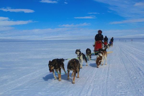 Kjøring med hundespann på snødekte vidder.
