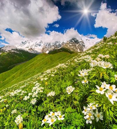 Grønne åser dekket av blomster teppe i solfylt sommerdag. Øvre Svaneti, Georgia.