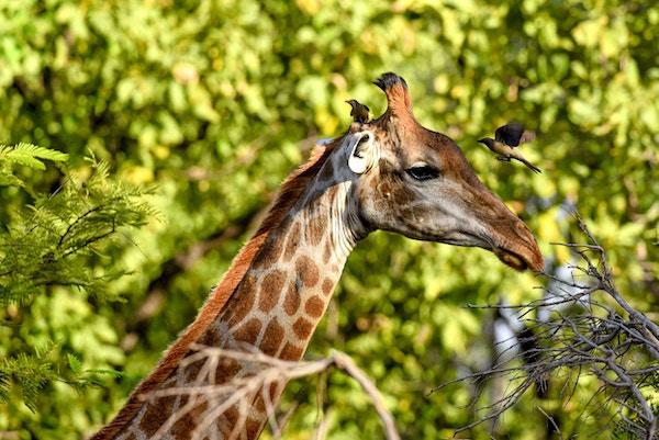 Unik dyreliv i Senegal.
