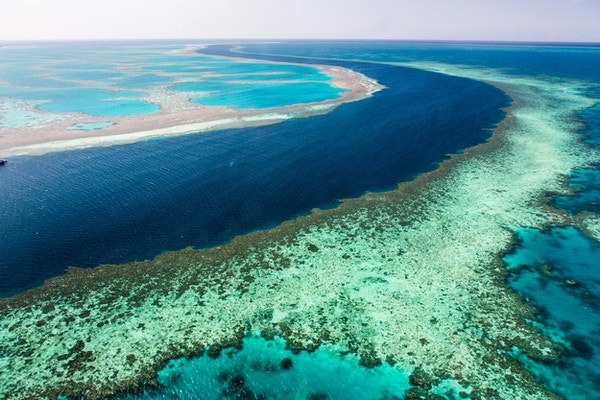 Unike Great Barrier Reef rommer mer enn 5000 arter fisk og bløtdyr