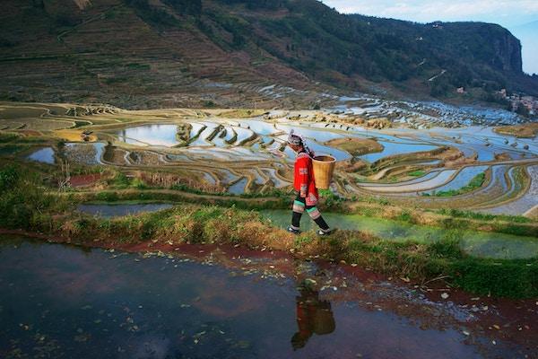 Rismarker i Yuanyang fylke, Yunnan, Kina