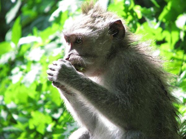Monkey Forest, Ubud, Indonesia.