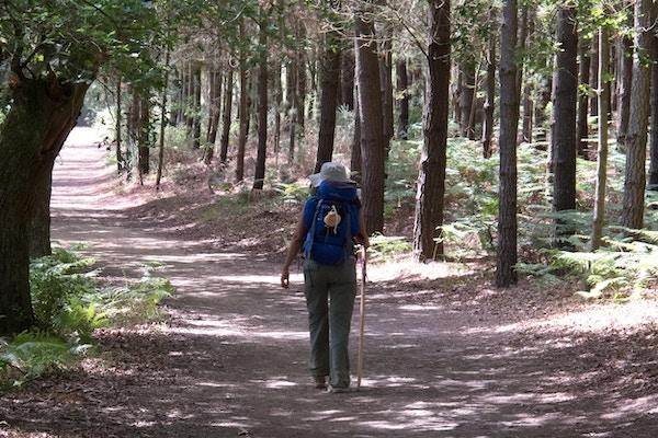 Pilegrim som går til Compostela og krysser en skog nær Portomarin, Galicia, Spania.