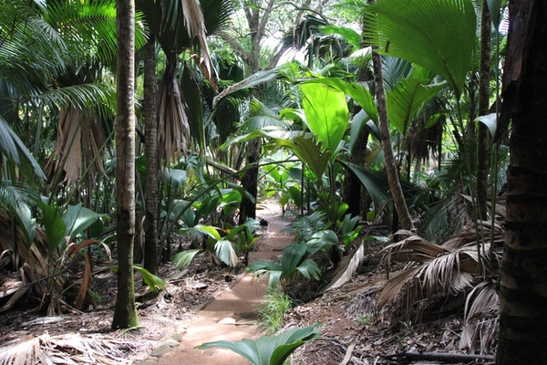 Vallé de Mai-skogen på Seychellene, Det indiske hav, Afrika.