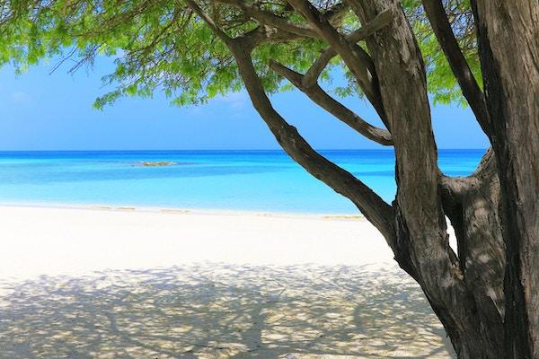 En tropisk strand med et tropisk tre på paradisøya Aruba utenfor Barbados i Det karibiske hav