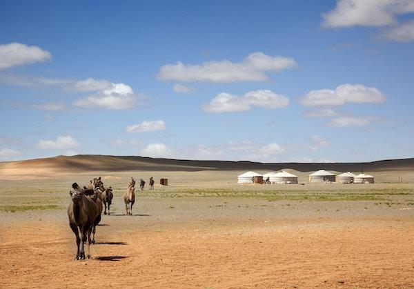 En kamel campingvogn over ørkenen og forlater Gers av bønder til det fjerne