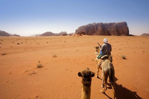 Reiser med kamel i Wadi Rum-ørkenen, Jordan