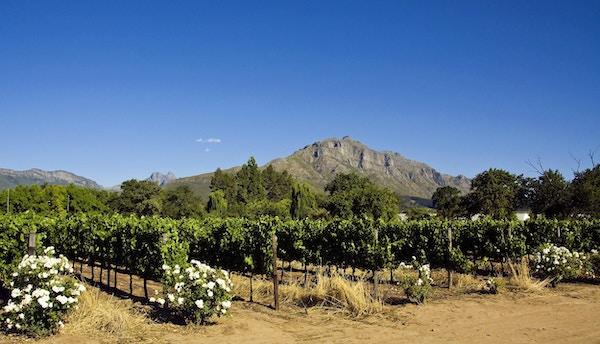 Stellenbosch scenics
