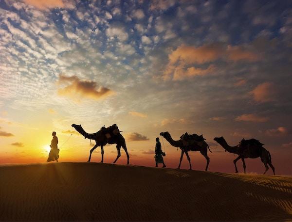 Rajasthan reisebakgrunn - to indiske kameleere (kameldrivere) med kameler-silhuetter i sanddynene i Thar-ørkenen ved solnedgang. Jaisalmer, Rajasthan, India