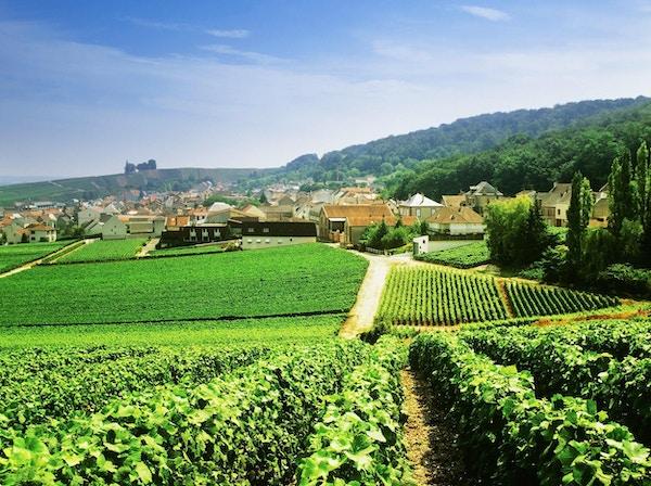 Utsikt over champagne-vingårder mot byen Epernay, Champagne- regionen, Frankrike
