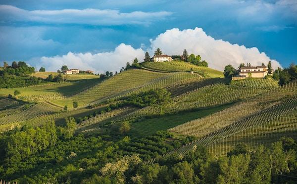 Langhe-området i Piemonte, Italia.