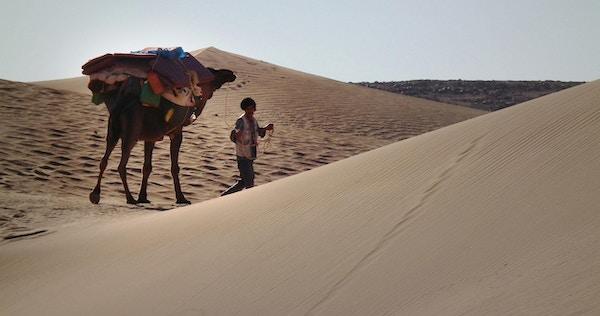 Marokko orken kamelvandringny
