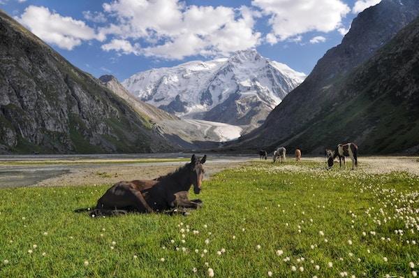 Nærbilde av en hest, nær Issyk-Kul innsjø med flokken i bakgrunnen
