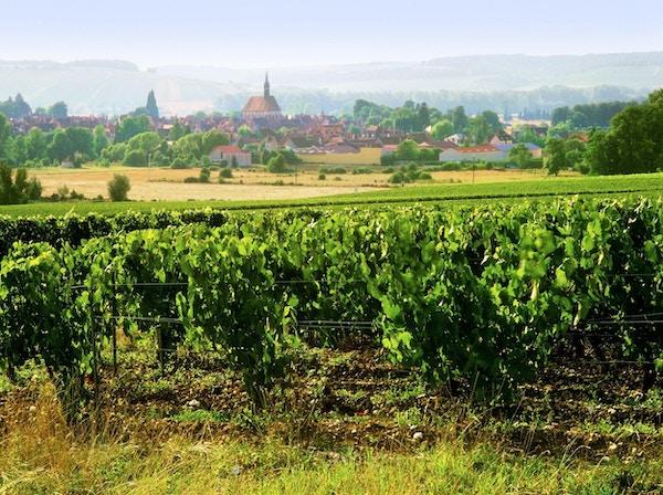 Chablis- landsby og vinåkre i Burgundy