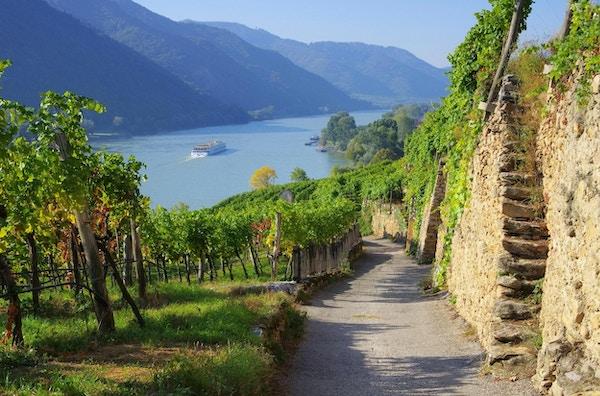 Wachau i Østerrike, vingård