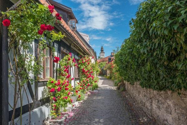 Roser vokser på vegger i en middelaldersgate i den historiske Hanse-byen Visby på den svenske østersjøen Gotland