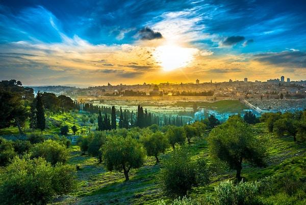 Utsikt over gamlebyen i Jerusalem fra Oljeberget med oliventrær i forgrunnen.