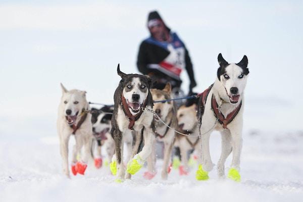 Mann kjører hundespann på Finnmarksvidda.