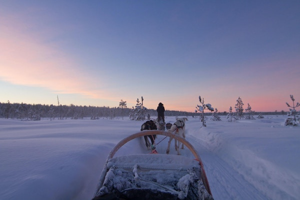Hundesledetur på Finnmarksvidda